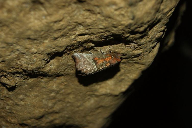 La découpure dans une grotte en hiver © Donovan Maillard - Parc national des Ecrins