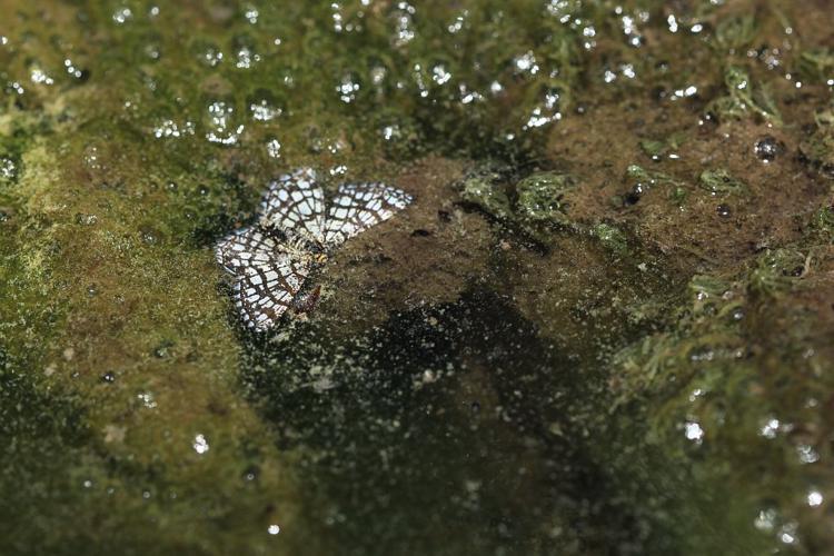 Réseau (Le), Géomètre à barreaux (La) © Marc Corail - Parc national des Ecrins