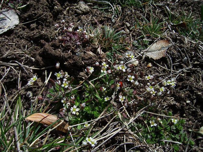 Drave de printemps © Bernard Nicollet - Parc national des Ecrins