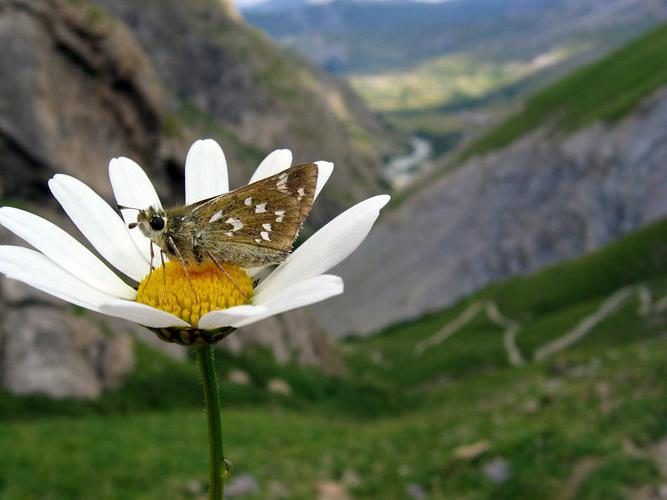 Virgule © Christophe Albert - Parc national des Ecrins