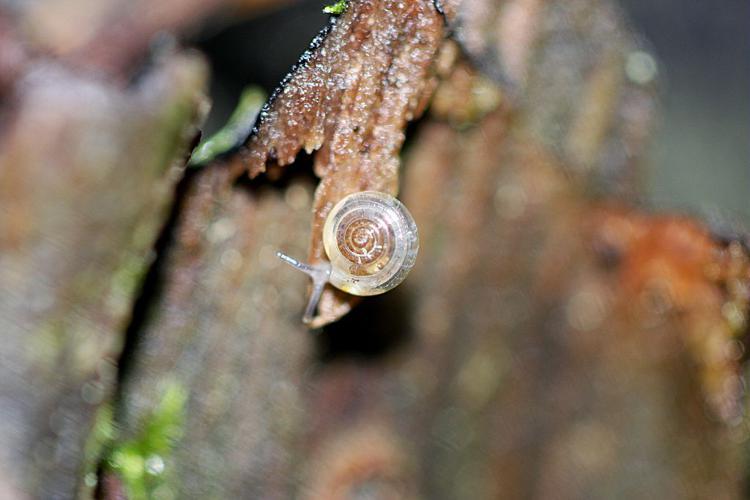 Cristalline diaphane © Damien Combrisson - Parc national des Ecrins