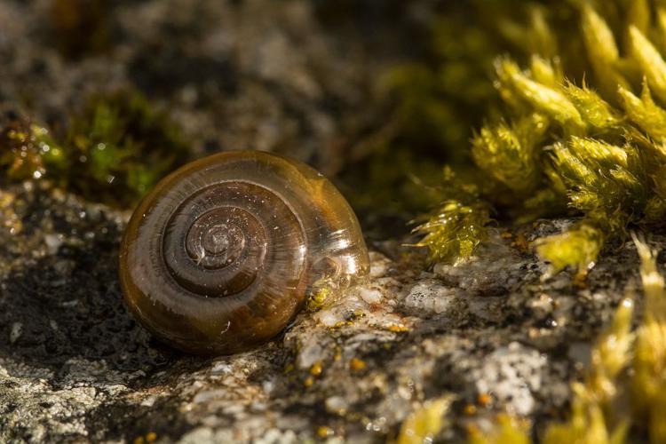 Luisant étroit © Mireille Coulon - Parc national des Ecrins