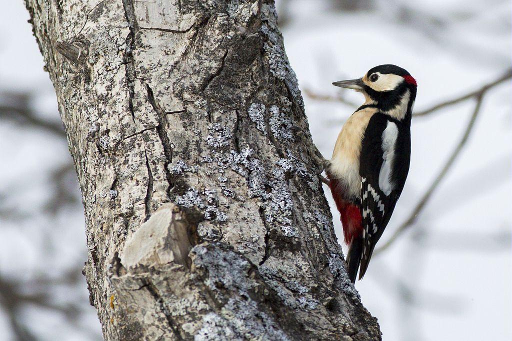Pic épeiche © Pascal Saulay - Parc national des Ecrins